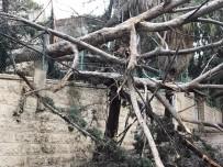 SOĞUK HAVA DALGASI - Filistin'de Şiddetli Yağış Ve Fırtına Ağaçları Devirdi