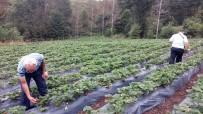 KİMYASAL GÜBRE - Ordu'da Organik Tarım Benimsendi