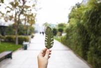 OKSIJEN - Teşekkür Belgeleri Ağaçlara Dönüşüyor