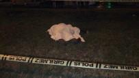 MURAT KAYA - Caddede Yürüyen Yayaya Araba Çarptı, 1 Kişi Hayatını Kaybetti