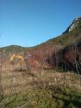 Isparta'da Kaçak Kazı Operasyonu Açıklaması 11 Gözaltı