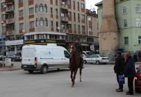 KAZıM TEKIN - Trafik Çilesine Atlı Çözüm