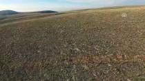 MILLI PARKLAR GENEL MÜDÜRLÜĞÜ - Anadolu Yaban Koyunlarının Sayısı Artıyor