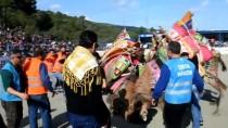 EZİLME TEHLİKESİ - Bodrum Deve Güreşi Festivali