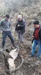 Elazığ'da Koruma Altındaki 2 Dağ Keçisi Kaçak Avcıların Kurbanı Oldu