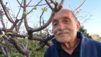 HAZİRAN AYI - Erik Ağacı Kış Ortasında Meyve Verdi