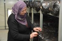 İSTIRIDYE - Mersin Büyükşehir Belediyesi'nden Üreticiye Destek