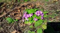 BAHAR HAVASI - Kış Ayına Rağmen, Bahar Gibi Çiçekler Açtı