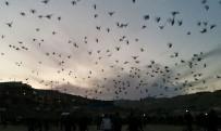 SÜLEYMANIYE - Şanlıurfa Semalarına Bırakılan Güvercinler Renkli Görüntülere Sahne Oldu