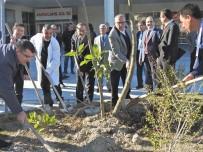 İŞ MAKİNASI - Çeşme'de Hastane Bahçesi Yeşillendirildi