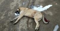GRUP GENÇ - Çok Sayıda Köpek Zehirlenerek Öldürüldü