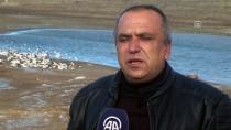 Devlet Desteğiyle Kaz Çiftliği Kurdu