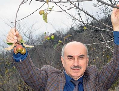 Elma ağacı kış mevsiminde meyve verdi