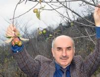 ÖRENCIK - Elma ağacı kış mevsiminde meyve verdi
