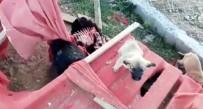 SOKAK KÖPEKLERİ - Sokak Köpekleri Ölüme Terk Edildi