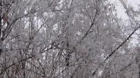 SIBIRYA - Ağrı Buz Tuttu