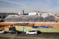 ENERJİ SANTRALİ - Gaziantep'e 26 Bin Metrekarelik Yeni Sera