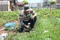 BELEDİYE ENCÜMENİ - 'Hobi Bahçesi' Kayıtları Başlıyor