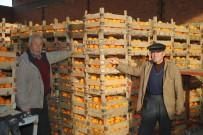 24 KASıM - İhracat Portakal Üreticisini Umutlandırdı