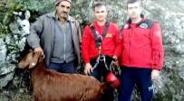 KEÇİ - Kayalıklardan düşen keçileri itfaiye kurtardı