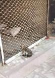 AHMET ER - Kepenge Sıkışan Kediyi İtfaiye Kurtardı