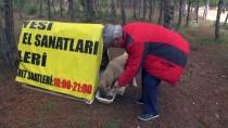 MEHMET ÖZGÜR - Sokak Köpeklerinin Dostu Gazete Patronu