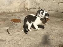 HAYVANLARI KORUMA DERNEĞİ - Bolu'da, Sokak Hayvanları Muayene Edildi