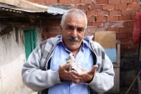 AHMET KARAKAYA - Çalınan Güvercinlere Değil Yavrulara Üzüldü
