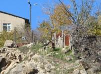 Çemişgezek'te Yaban Keçileri İlçe Merkezine Kadar İniyor