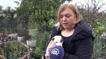 HAYVANLARI KORUMA DERNEĞİ - Okla Öldürülen 'Garip'in Yavruları Emin Ellerde