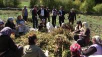 KURU FASULYE - Artvin'de İmece Usulüyle Türküler Eşliğinde Kuru Fasulye Hasadı Gerçekleştirildi