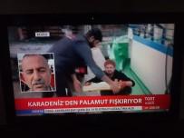 SAKARYA VALİSİ - Vali Balkanlıoğlu Pamukova'da İncelemelerde Bulundu