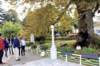 YÜRÜYEN KÖŞK - Atatürk'ün 400 Yaşındaki Çınar Ağacı Bakıma Alındı