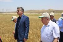 KIRAÇ - Eskişehir'de En Yeni Bitki Çeşitleri Çiftçilere Tanıtıldı