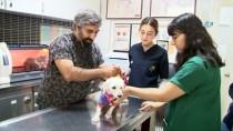 Köpeği Veteriner Bahçesine Bağlayıp Terk Ettiler