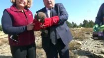 ORMAN YANGıNLARı - Tedavisi Tamamlanan Akbaba Ve Kartal Doğaya Bırakıldı