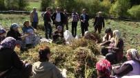KURU FASULYE - Türküler Eşliğinde Kuru Fasulye Hasadı