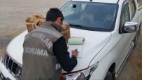 KıNALı - Van'da Keklik Avcılarına Ceza
