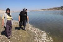 PORSUK - Balık Ve Kerevitlerin Ölüm Nedeni Oksijensizlik