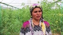 İŞ KADINI - Seracı İş Kadını Hemcinslerine 'Işık' Oldu
