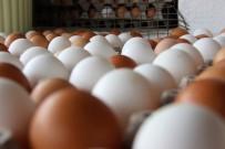 TAKVİM - Tavuk Yumurtası Üretimi Arttı