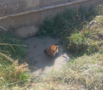 Balçığa Saplanan Köpeği İtfaiye Kurtardı