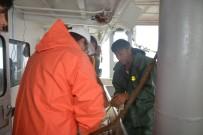 BALIK AVI - Balıkçılar Palamut Bolluğundan Memnun