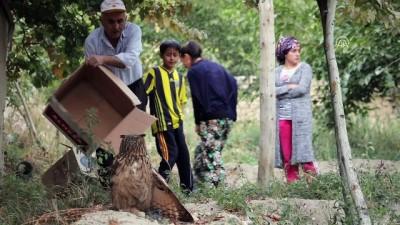 Malatya'da Yaralı Bulunan Baykuş Tedavi Altına Alındı