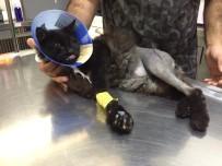 SOKAK KEDİSİ - (ÖZEL) Ayakları Parçalanan Kedi Ölümden Kurtarıldı