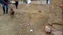 DEDEKTÖR KÖPEK - Samanların Arasında 74 Kilogram Eroin Ele Geçirildi