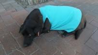SEMPATIK - Burhaniye'de Sokak Köpeği Vatandaşların Maskotu Oldu