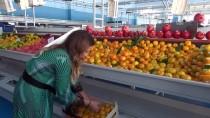 UKRAYNA - Hibe Desteği Alan Ev Kadını Patron Oldu