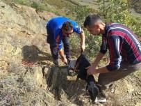 AV KÖPEĞİ - Kayalıklarda Mahsur Kalan Av Köpeğini AFAD Ekipleri Kurtardı