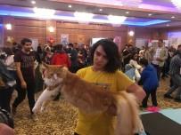 EMRULLAH İŞLER - Kediler Güzellik Yarışmasında Birinci Olmak İçin Yarıştı